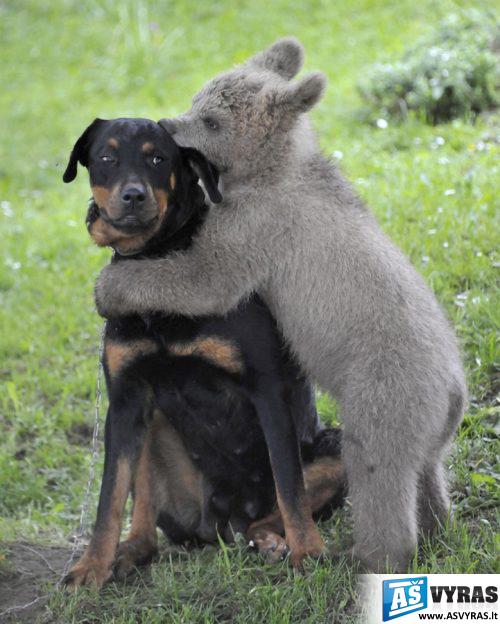juokingi gyvūnai