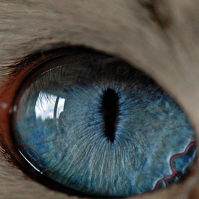 neitiketinos-zmoniu-akys-zmogaus-akis-tavo-akys-akis-akys-is-arti-10