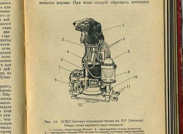 biorobotas-suo-kiborgas-robotas-karys-kareivis-biologinis-slaptas-projektas-sovietu-sajunga-2