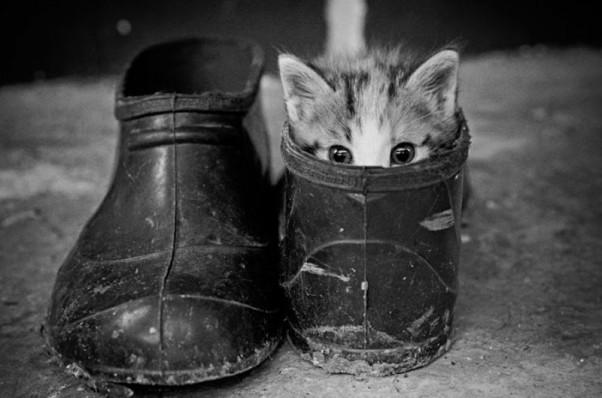 Žaismingas kačiukas
