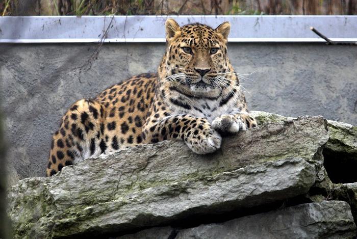 Talino zoologijos sodas