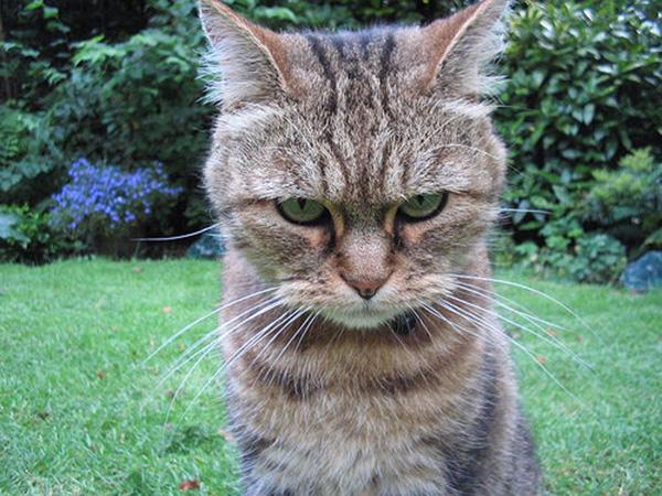 Kaip bausti katiną!?